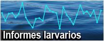 Informes Larvarios
