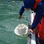 Muestreo-plancton
