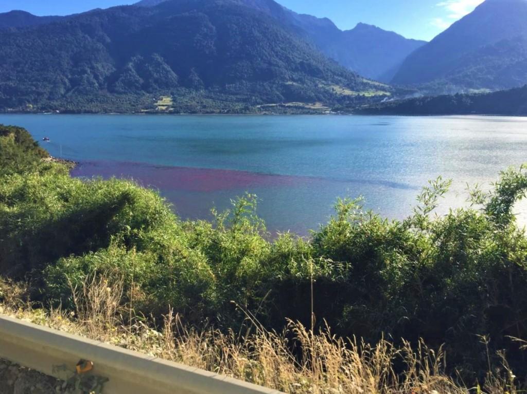 Descartan que discoloración observada en aguas de Cochamó sea nociva para el cultivo de mejillón chileno
