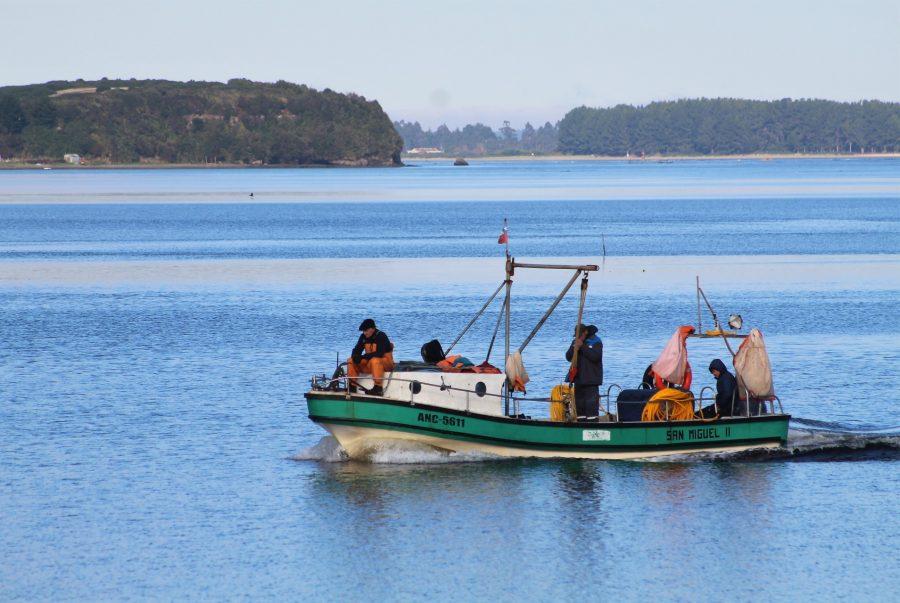 Ya se encuentra abierto concurso de diversificación productiva para pescadores artesanales de Ancud