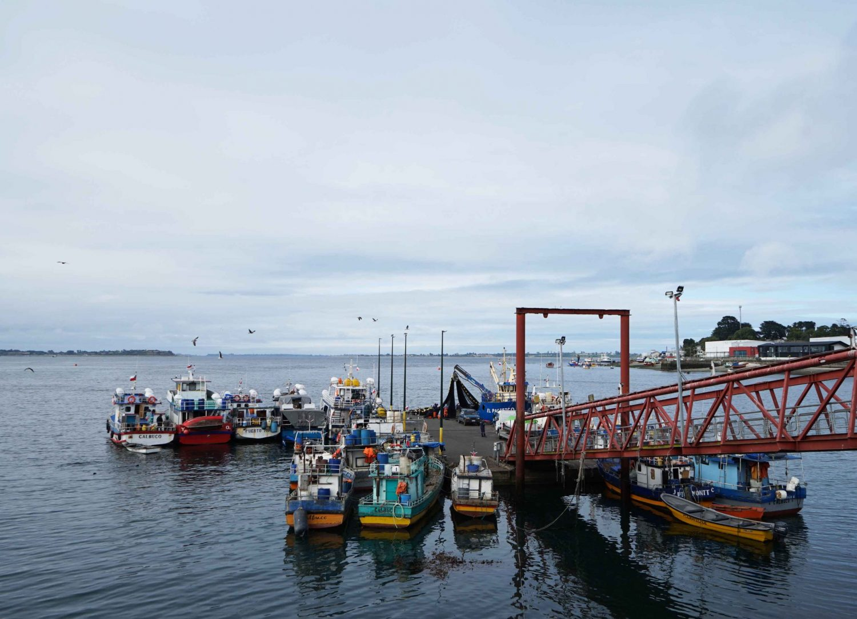 """Desde Los Ríos hasta Magallanes: convocan a pescadores artesanales a seminario virtual para analizar la """"Ley de caletas"""""""